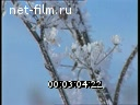 Footage Winter Landscape. (1990 - 1999)