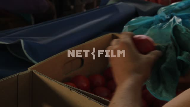 The man rubs the tomatoes and puts them in a box. Tomatoes, hand, close-up, box, cloth, tomato,...