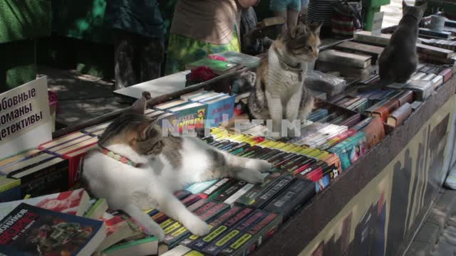 Cats lie on books. Cats, cats, book, collapse, bookstore, books, lay down, sit Cats, cats, book,...