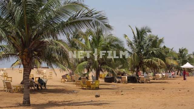 People sit under large palm trees The Africans, palm trees, ocean, relaxation. Ethnography. Nature