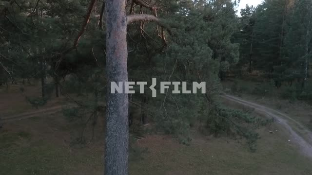 Aerial photography, koperna shot, Russian autumn forest, ancient pines, beautiful autumn trees, the...