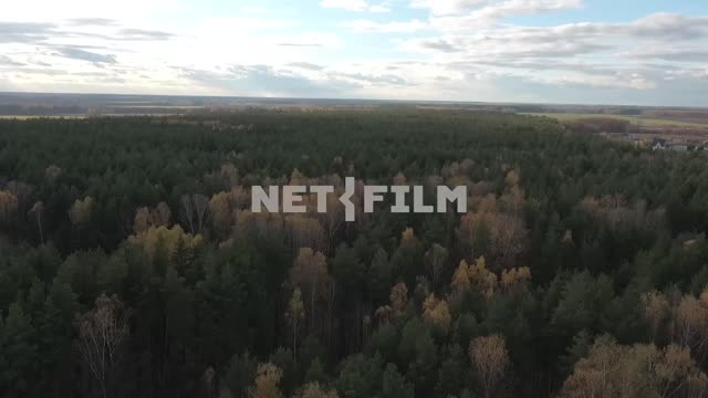 Aerial photography, koperna shot, Russian autumn forest, beautiful autumn trees, open spaces....