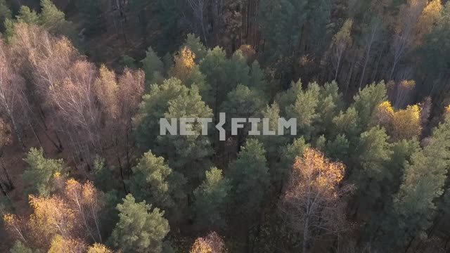 Aerial photography, koperna shooting, forest, beautiful autumn trees top view of the road Aerial...