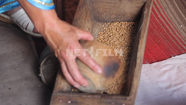 Female hands scoop up the wheat from the wooden kudacki Female hands scoop up the wheat from the...