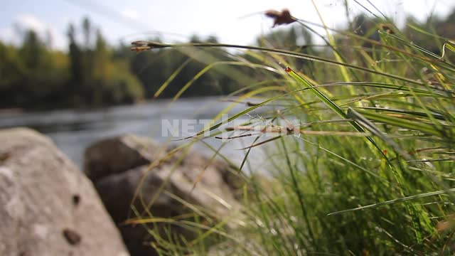The river through the sedge,rocks, running water, shore, clouds, nature The river through the...