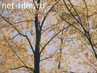 Footage Autumn and winter landscapes. (1980 - 1989)