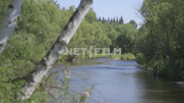 A view of the river in the foreground, the trunks of birch trees. River, river, flow, water, tree...