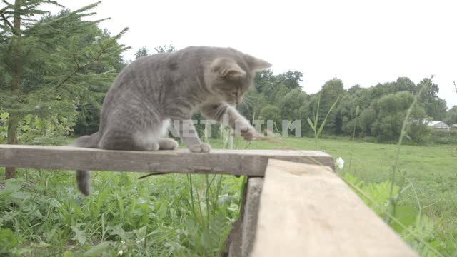 Gray cat jumps up on the railing, playing with a blade of grass, jumps. Cat, cat, gray, railing,...
