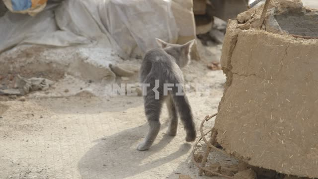 Gray number of walks amongst the construction sites. Cat, cat, gray, building, workshop bell to...