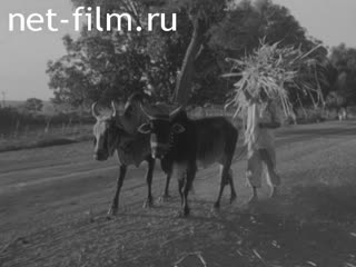 News Foreign newsreels 1979 № 6106