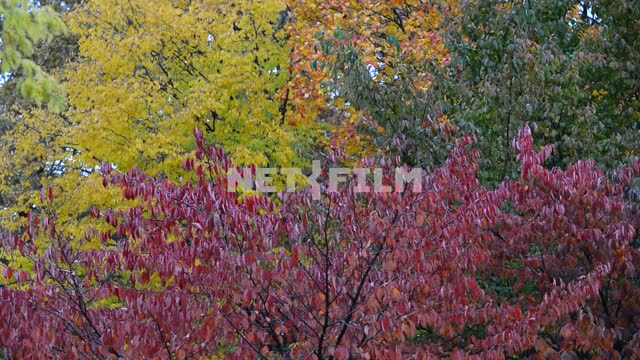 Colorful tree leaves Trees, autumn forest, yellow leaves, red leaves, orange leaves, nature,...