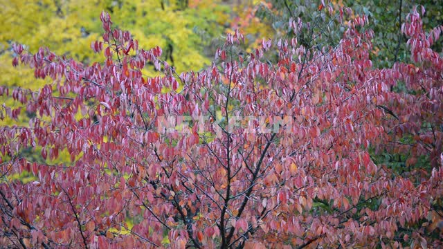 Colorful tree leaves Trees, autumn forest, yellow leaves, red leaves, nature, autumn, day, light