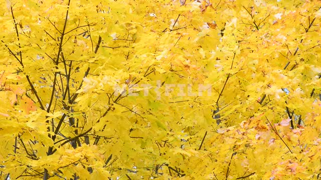 Autumn forest Trees, forest, foliage, yellow leaves, autumn, trees, day, nature, light