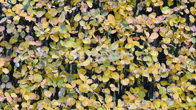 Foliage. Autumn Leaves, autumn, nature, day, light