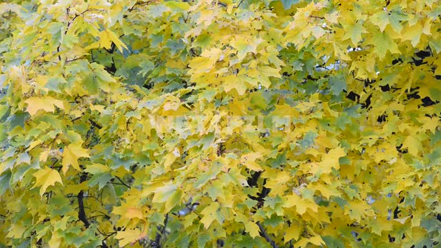 The leaves of the trees. Autumn Trees, forest, foliage, yellow leaves, autumn, nature, day, light