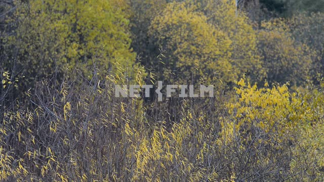 Field of plants in a forest. Autumn Field plants, forest, trees, autumn forest, nature, autumn,...