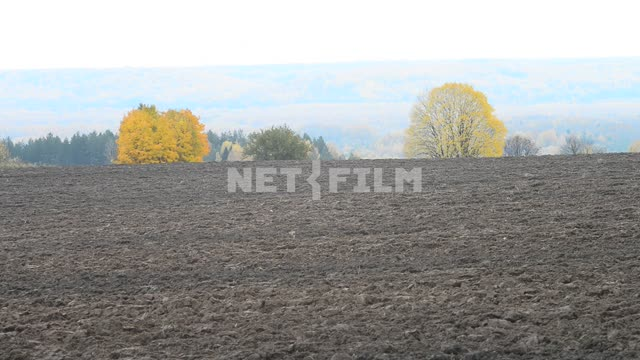 The plowed field. Autumn Field, plowed field, trees, forest, space, nature,autumn, day, light