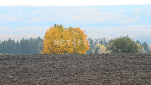 Tree in plowed field Field, plowed field, trees, forest, space, nature, autumn, day, light