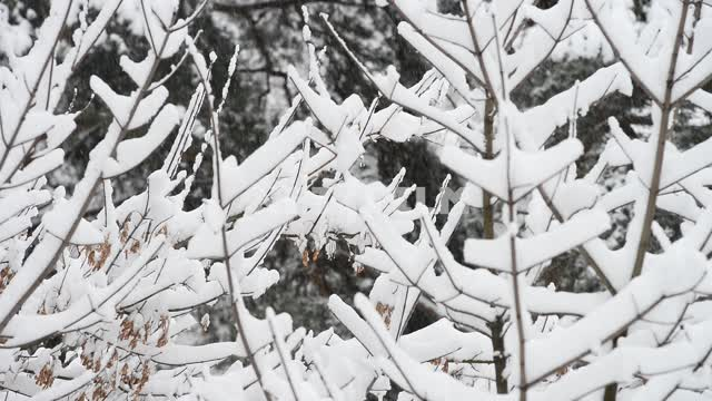 Snow in the forest Snow, winter, branches