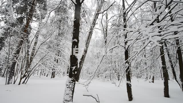 Winter forest Forest, trees, winter, snow, nature, snow, branches, snow,winter, day