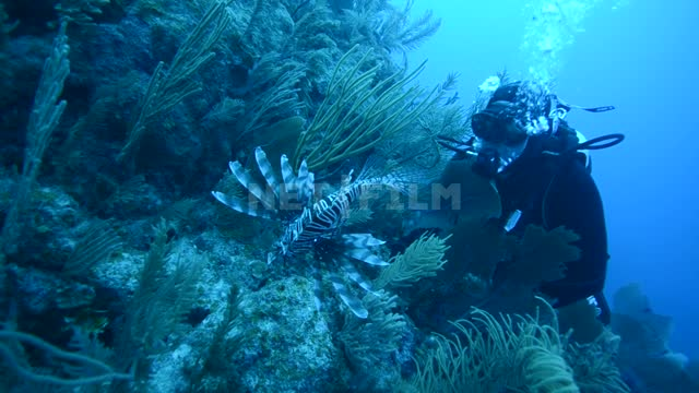 A scientist scuba diver watches exotic fish in the ocean Ocean Underwater...