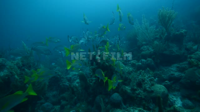 A group of beautiful exotic fish swims on the ocean floor Ocean Underwater...