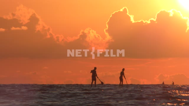 SAP surfers on the sea horizon in the rays of the setting sun Sea, nature, summer, landscapes,...