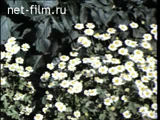 Newsreel Moscow 1976 № 27 Our yard.