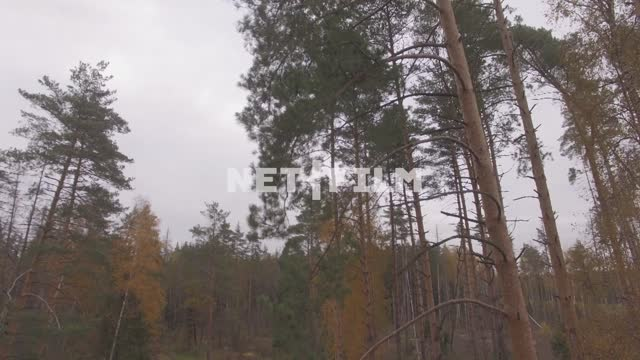 Autumn woods (shot with motion) The aerial photo. Nature. General plan. The sky is grey. trees. The...