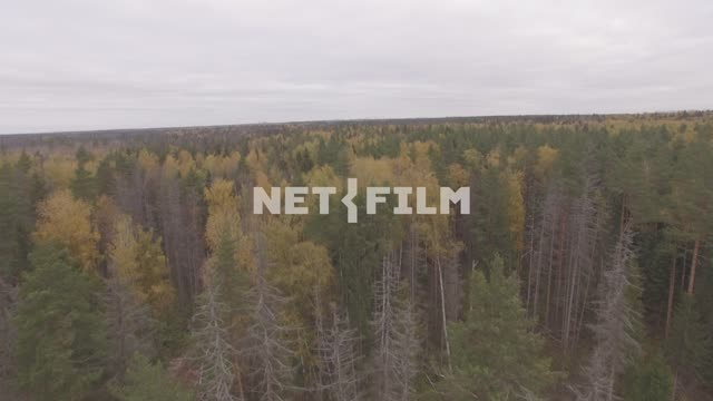 Aerial photo of a forest The aerial photo. General plan. The sky. Clouds. Trees. Mixed...