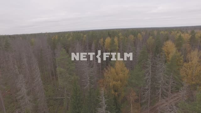 Aerial photo forest The aerial photo. General plan. Forest Shooting motion The...