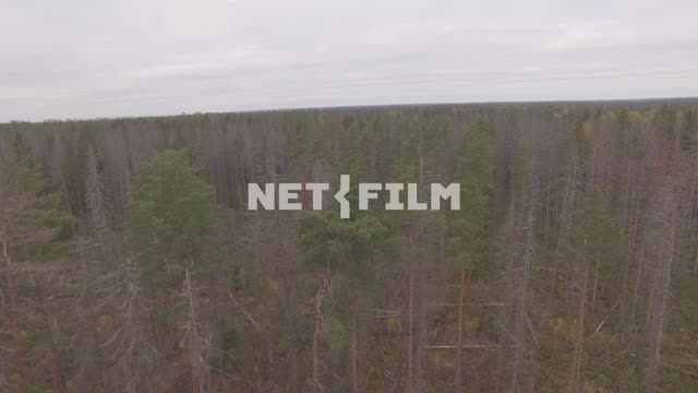 Shot of the autumn forest with quadcopter The aerial photo. General plan. The...