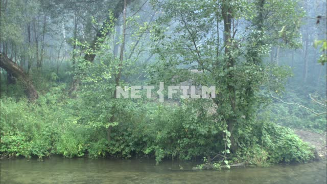 River in the forest. Nature. Green forest. Sandy bottom. Grass. The bushes. Fog on the...
