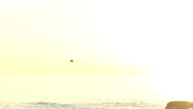 A bird flying over the sea. Nature. Sea. Sky. The sun at sunset. Summer.