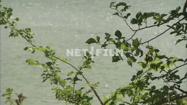 Tree branch on a background of lake Nature. General plan. River. The leaves of the tree. Shore with...