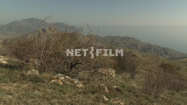 The view of the mountains and the sea. Koktebel, sea, mountains, hills, plants, bushes.