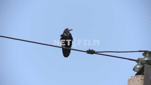Crow sitting on the wires. Birds. Sky.