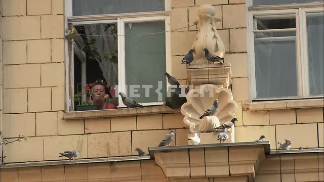 A woman looks out of the window. Woman, window, curtain rod, windowsill, pigeons, stucco, Moscow