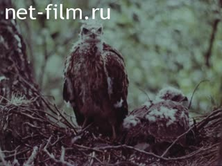 Footage Steppe and mountain birds. (1975 - 1985)